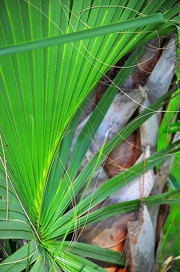 Palm Frond by joevoz