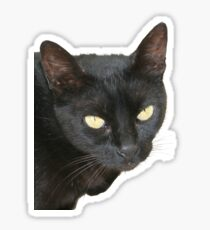 Photograph Of Jet Black Cat With Yellow Eyes Sticker