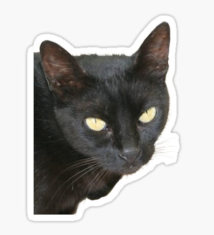 Black Cat Isolated on Black Background Sticker