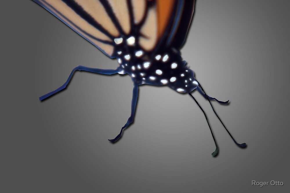 Butterfly close-up by Roger Otto