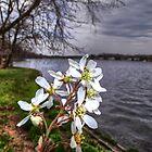 """""""River Blossom"""" by Anthony Cherubino"""