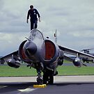 Harrier Ready for Action by Paul Holman