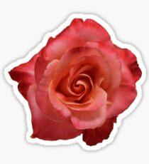 Ombré Red Garden Rose III - Hipster/Pretty/Trendy Flowers Sticker