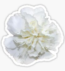 Single White Carnation - Hipster/Pretty/Trendy Flowers Sticker