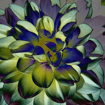 purple by hartpix