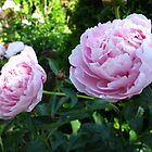 Peony talking heads by MarianBendeth