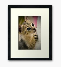 Playing Kitty Framed Print