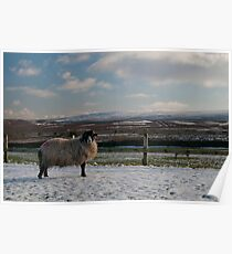 A Sheep in the Snow Poster