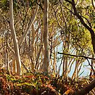 On the way to Hyams Beach - Jervis Bay NSW by JennyMac