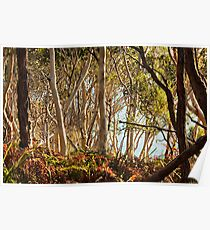 On the way to Hyams Beach - Jervis Bay NSW Poster