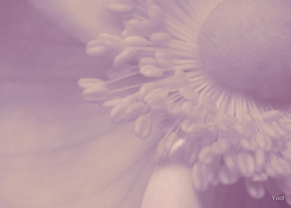 Purple Haze by Yool