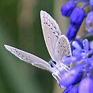 Blue Angel by Arla M. Ruggles
