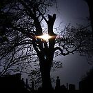 Tree by Kamelka80
