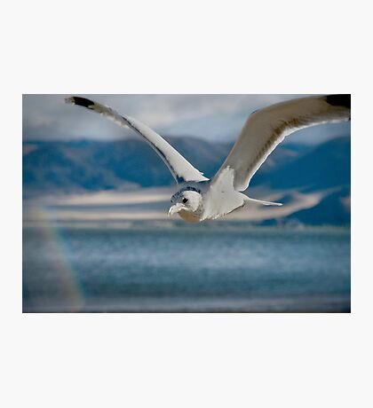 Seagull and a Rainbow: Reminder of Promises Kept  Photographic Print