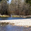 Fly fishing the middle Bitterroot River  by amontanaview