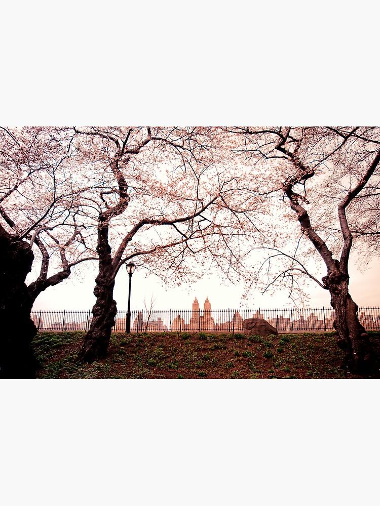Cherry Blossoms - Central Park Reservoir - New York City by vgucwaphoto