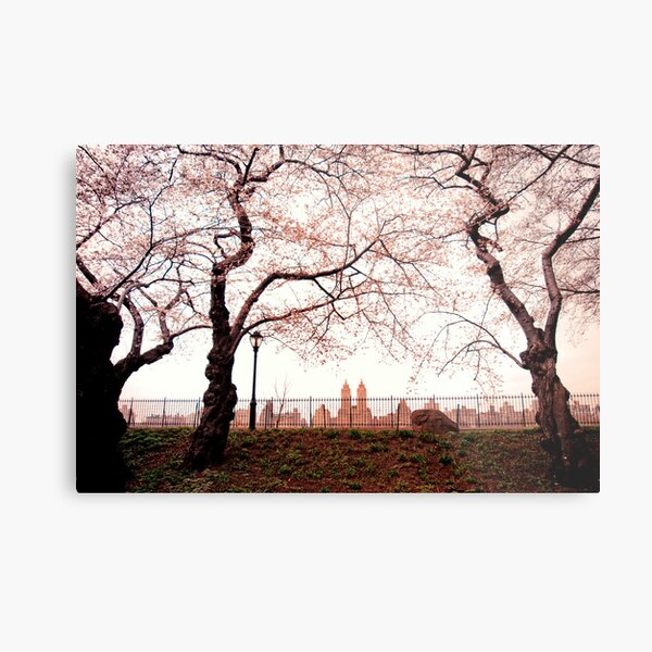 Cherry Blossoms - Central Park Reservoir - New York City Metal Print