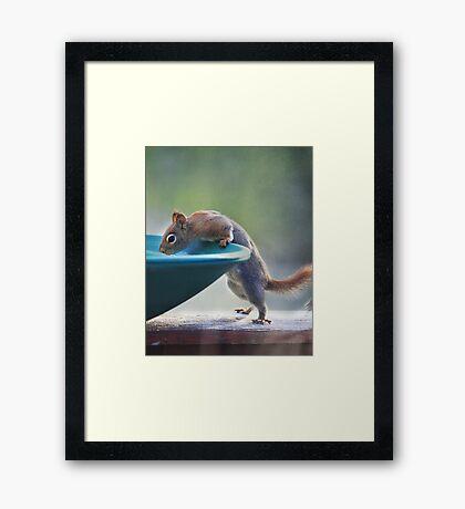"""Hmmm ~ Drinking Fountain Or Squirrel Pool ?"" Framed Print"