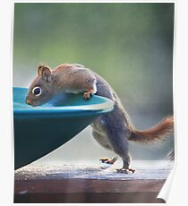 """""""Hmmm ~ Drinking Fountain Or Squirrel Pool ?"""" Poster"""