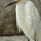 Bird by PhotoGirlSC