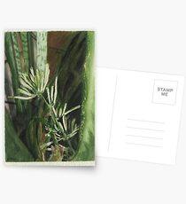 Blooming Snake Plant (Sansevieria trifasciata ) Postcards