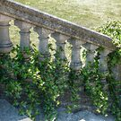 Ivy On The Stone Steps, The Breakers Patio by Jane Neill-Hancock