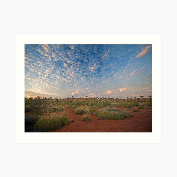 Canning Spinifex Art Print