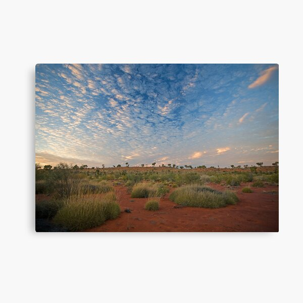 Canning Spinifex Canvas Print
