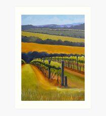 Vineyard Mornington Peninsula Art Print