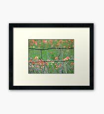 Pasture Paintbrush Framed Print