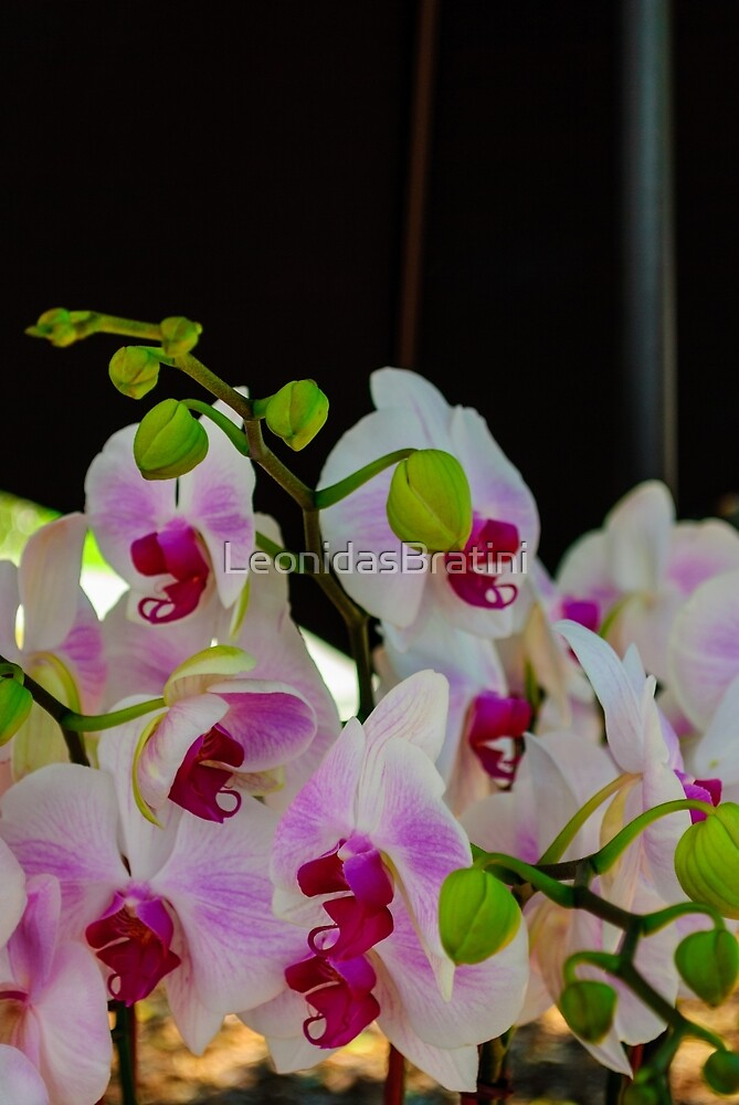 Orchids At The Park  by LeonidasBratini