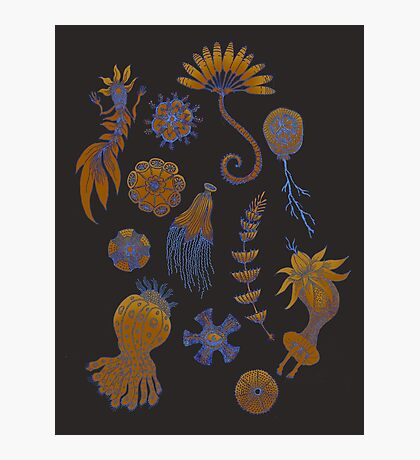 Sea Ballet in Psychedelic Colors, more apologies to Ernst Haeckel Photographic Print