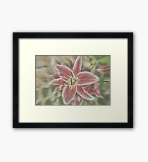 Pictures Of Lily Framed Print