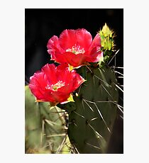 Red Prickly Pear Cactus  Photographic Print