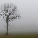 Tree in morning fog by Ulf Bjolin