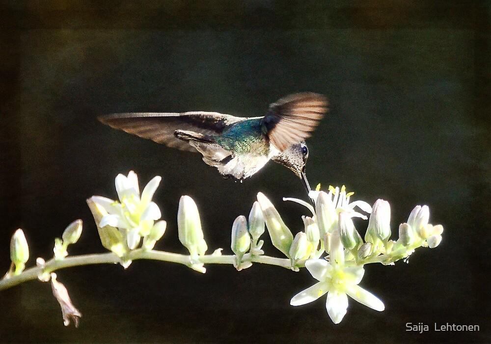 Morning Nectar Flyby  by Saija  Lehtonen
