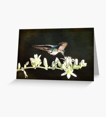 Morning Nectar Flyby  Greeting Card
