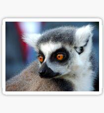 Ringtail Lemur Gaze Sticker