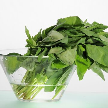 Basil Leaves by dalyjk