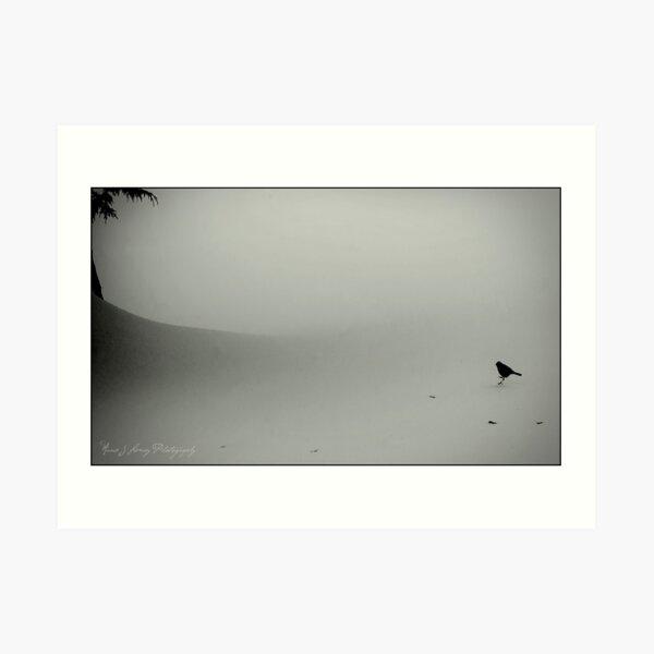 Little Snow Bird Art Print