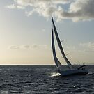 Sailing Towards the Sunlight by Georgia Mizuleva
