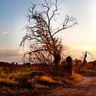 Haunted Tree by Clockworkmary