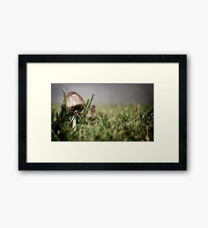 Little Mushrom Framed Print