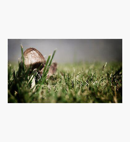 Little Mushrom Photographic Print