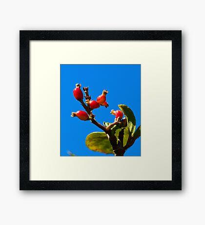 Little Red Fruit Framed Print
