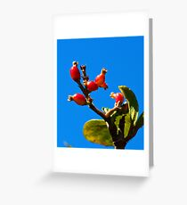 Little Red Fruit Greeting Card