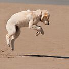 Leaps and bounds, Bannow beach, County Wexford, Ireland by Andrew Jones