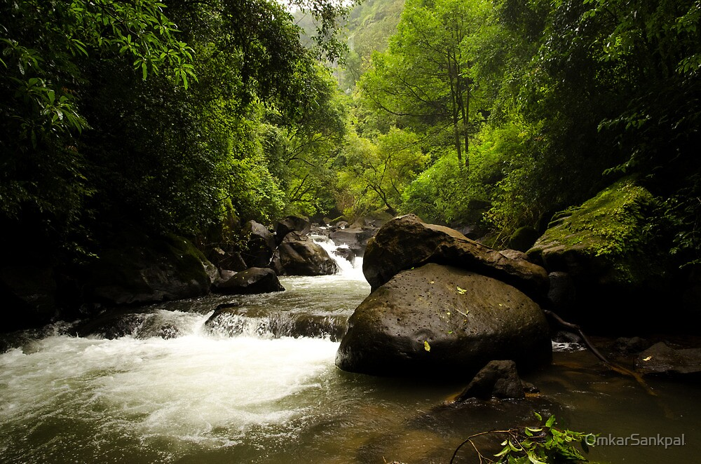 Quot Monsoon Rainforest Stream Quot By Omkarsankpal Redbubble
