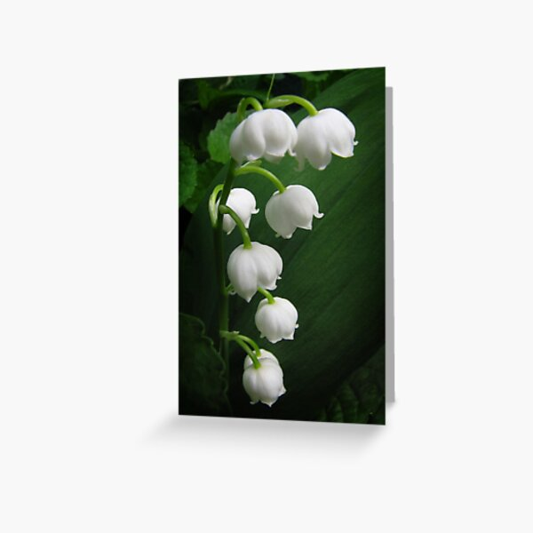 The Sound of Flowers - Lily of the Valley Greeting Card