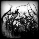 bw trees by ShellyKay
